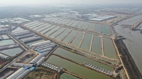我国将水产养殖生产转向高价值物种