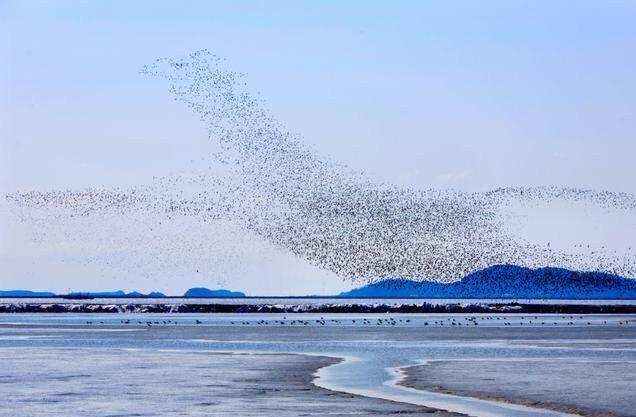 这个地方每年4月有上百万只鸟云集中在这里,景象壮观,你见过吗?
